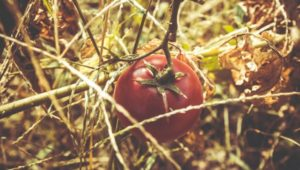 Problems Caused By Genetically Modified Foods